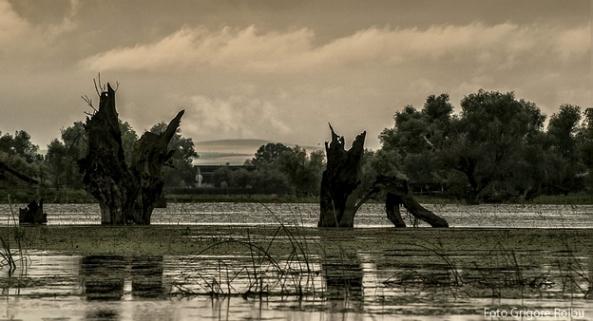 16 Partizani 2013-Foto Grigore Roibu