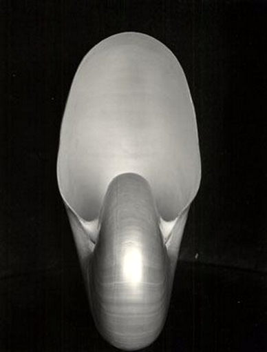 E. Weston - Nautilus (Sursa foto Wikipedia)